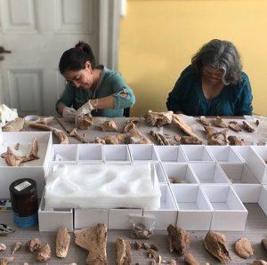 Paleontología 002